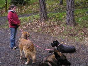 dog training, dog trainer