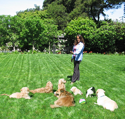 Shewhisperer dog training