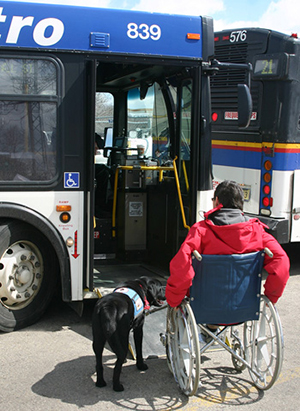 Shewhisperer Service Dogs, Marin, Sonoma County
